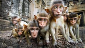 Monkeys in temple in Lopburi, Thailand, included in tours offered by Asia Vacation Group