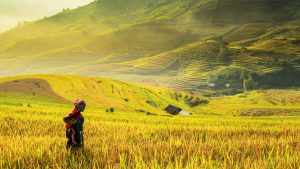 Paddy fields, Sapa, Vietnam, included in tours offered by Asia Vacation Group